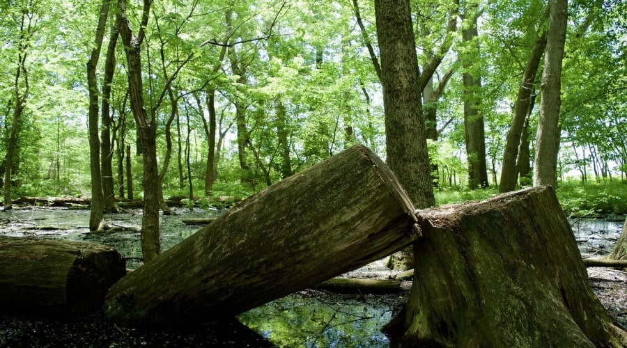 Benefits of Hiring a Tree Removal Service