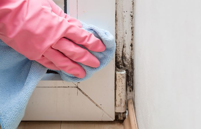 Prevent Mold and Stay Healthy: A Simple Guide to Warding off Mold