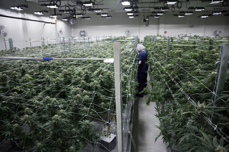 Cultivation Facility Design: Things You Should Consider